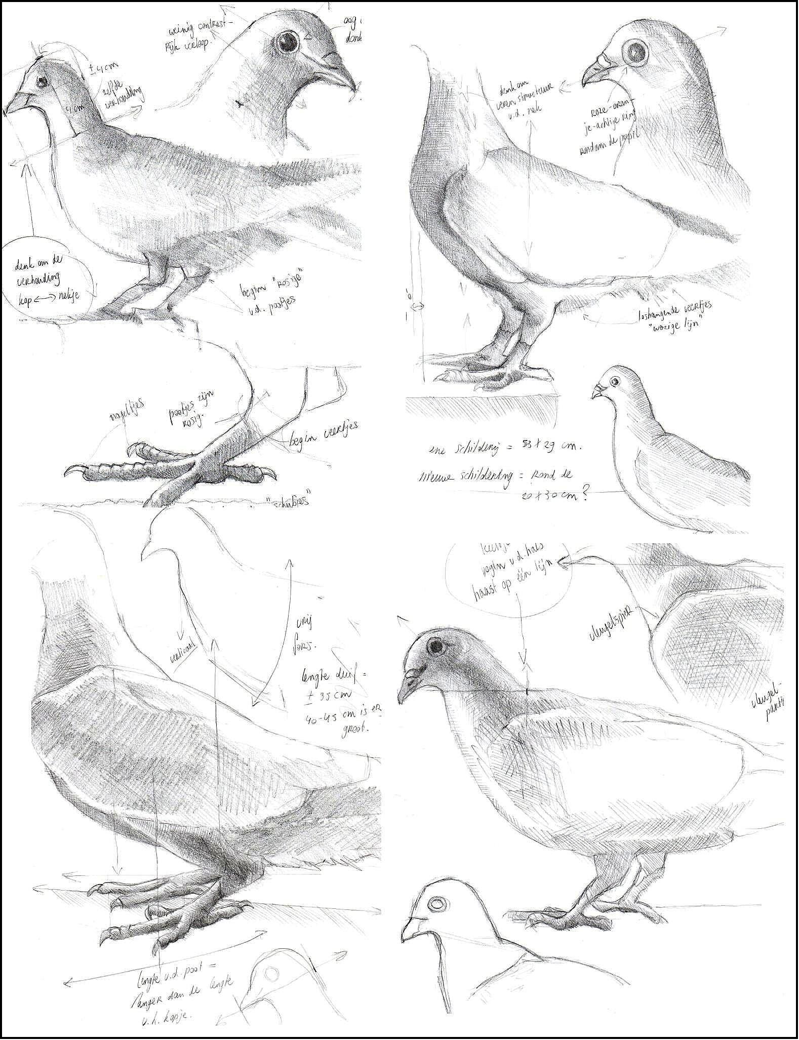 Schetsen van duiven